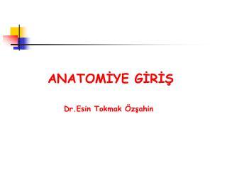 ANATOM?YE G?R??      Dr.Esin Tokmak �z?ahin