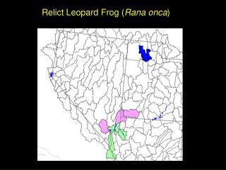 Relict Leopard Frog ( Rana onca )