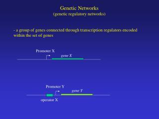 Genetic Networks (genetic regulatory networks)