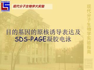 目的基因的原核诱导表达及 SDS-PAGE 凝胶电泳