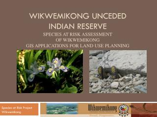 Species at Risk Project Wikwemikong