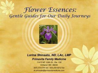 Flower Essences:  Gentle Guides for Our Daily Journeys