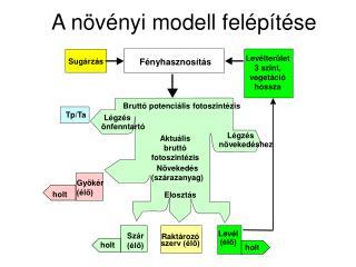 A növényi modell felépítése