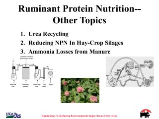 Ruminant Protein Nutrition--Other Topics