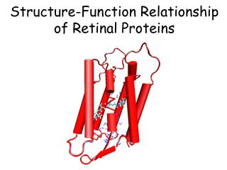 Structure-Function Relationship of Retinal Proteins