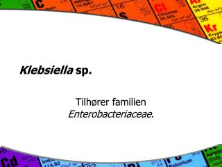 Klebsiella  sp.