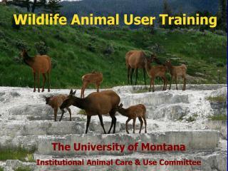 Wildlife Animal User Training
