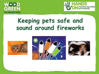 Keeping pets safe and  sound around fireworks