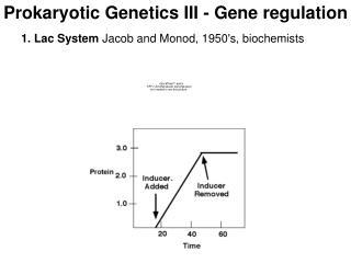 Prokaryotic Genetics III - Gene regulation