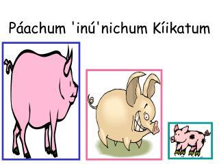 Páachum 'inú'nichum Kíikatum