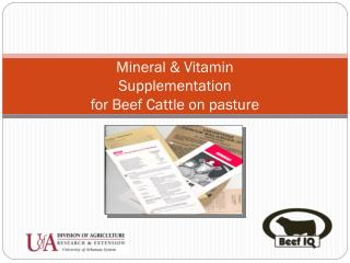 Mineral & Vitamin Supplementation for Beef Cattle on pasture