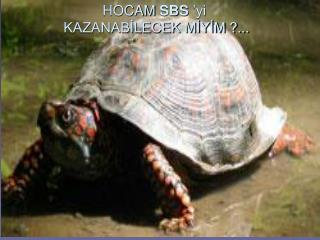 HOCAM  SBS  'yi  KAZANABİLECEK MİYİM ?...