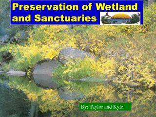 Preservation of Wetland and Sanctuaries