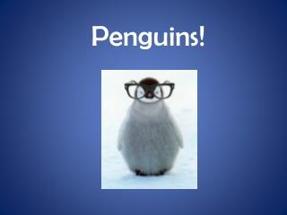 The Fiordland Penguin