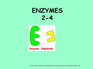 ENZYMES 2-4