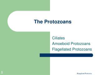 The Protozoans