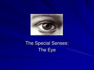 The Special Senses: The Eye