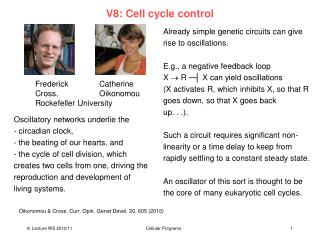 V8: Cell cycle control
