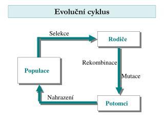 Evoluční cyklus