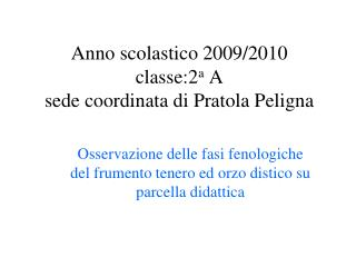 Anno scolastico 2009/2010 classe:2 a  A sede coordinata di Pratola Peligna