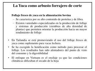 La Yuca como arbusto forrajero de corte