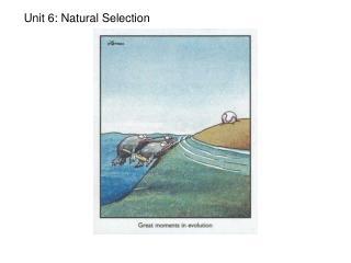 Unit 6: Natural Selection