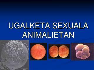 UGALKETA SEXUALA  ANIMALIETAN