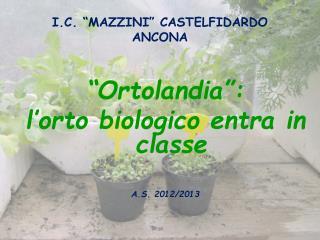 """I.C. """"MAZZINI"""" CASTELFIDARDO  ANCONA"""