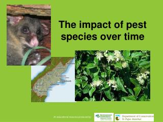 The impact of pest species over time