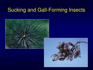 Sucking and Gall-Forming Insects