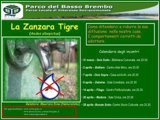 La Zanzara Tigre ( Aedes albopictus )