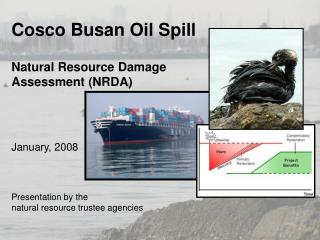 Cosco Busan Oil Spill Natural Resource Damage  Assessment (NRDA) January, 2008