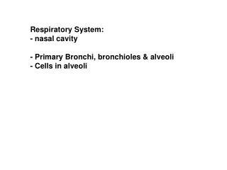 Respiratory System: - nasal cavity - Primary Bronchi, bronchioles & alveoli - Cells in alveoli