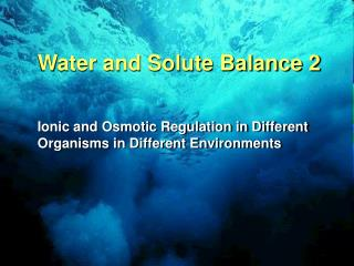 Water and Solute Balance 2