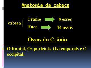 Anatomia da cabeça