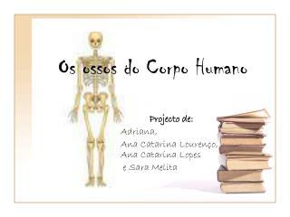 Os ossos do Corpo Humano