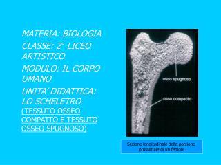 MATERIA: BIOLOGIA CLASSE: 2° LICEO ARTISTICO MODULO: IL CORPO UMANO