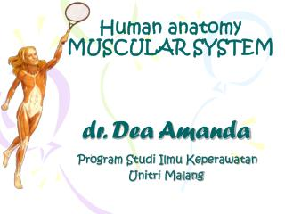 Human anatomy MUSCULAR SYSTEM