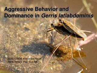 Aggressive Behavior and  Dominance in  Gerris latiabdominis