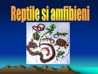 Reptile si amfibieni