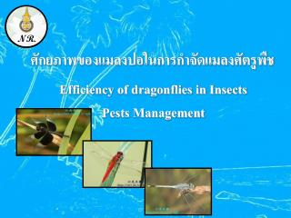 Efficiency of dragonflies in Insects Pests Management
