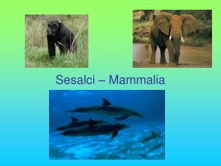 Sesalci – Mammalia