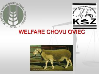 WELFARE CHOVU OVIEC
