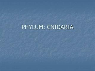 PHYLUM: CNIDARIA