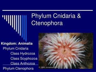 Phylum Cnidaria & Ctenophora