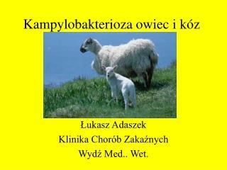 Kampylobakterioza owiec i kóz