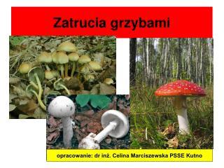 Zatrucia grzybami