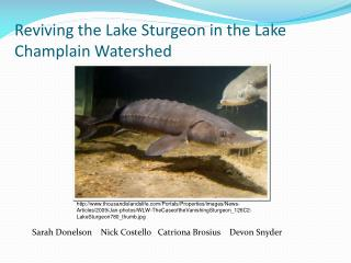 Reviving the Lake Sturgeon in the Lake Champlain Watershed