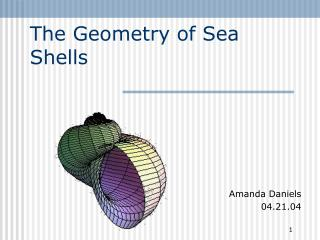 The Geometry of Sea Shells