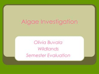 Algae Investigation